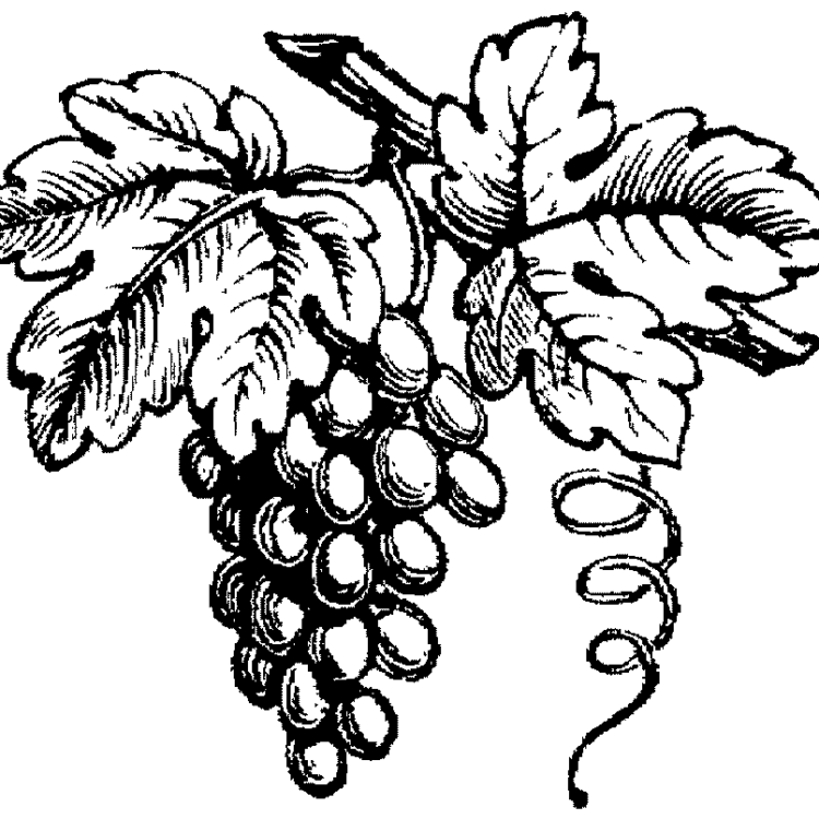 brunellodrue